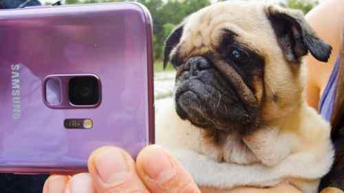 BuzzFeed și The Dodo prezintă Super Slow-mo de pe Samsung Galaxy S9 și S9+